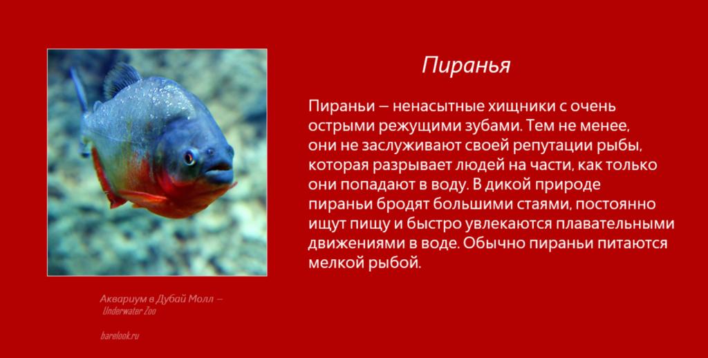 Пираньи - Underwater Zoo - Аквариум в Дубай Молл
