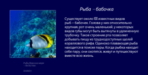 Рыбы Красного моря - Рыба-бабочка