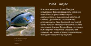 Рыбы Красного моря - Рыба-хирург