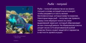 Рыбы Красного моря - Рыба-попугай