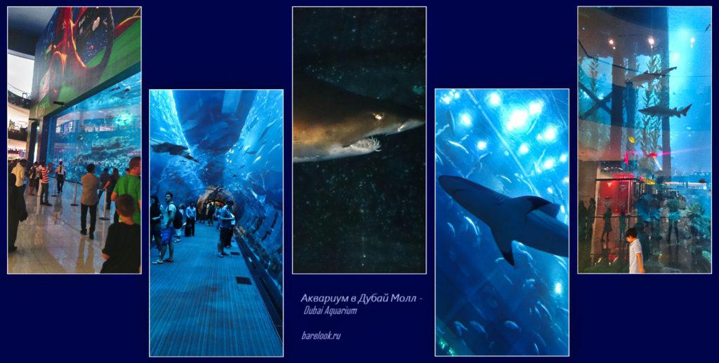 Аквариум в Дубай Молл - Dubai Aquarium - Акулы