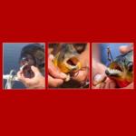 Пираньи! Руками не трогать! — Underwater Zoo