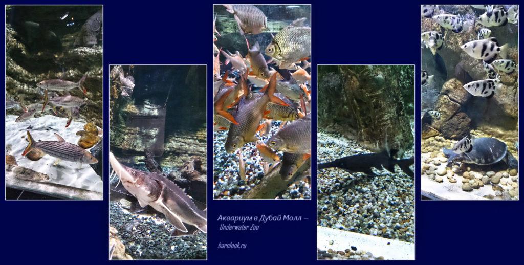 Подводный зоопарк в Дубай Молл — Underwater Zoo